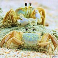 Ghost Crabs by Paulette Thomas
