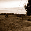 Ghost Horses Of Huckleberry Lane by Heather S Huston