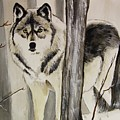 Ghost In The Woods by Carol Blackhurst