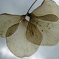 Ghost Of A Flower  by Mary Ellen Mueller Legault