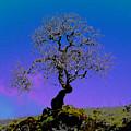 Ghost Tree by JoAnn SkyWatcher