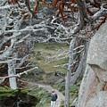 Ghost Trees by Douglas Barnett