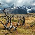 Ghost Trees Of Patagonia by Stuart Gordon