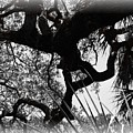 Ghostly Limbs by Shannon Sears