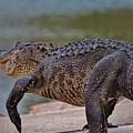 Giant Alligator  by Cynthia Guinn