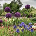Giant Allium Guards by Jean Noren