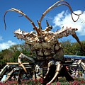 Giant Lobster by Tammy Chesney