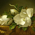 Giant Magnolias On A Cloth by MotionAge Designs