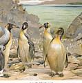 Giant Penguins, C1900 by Granger