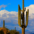 Giant Saguaro In The Southwest Desert  by James BO  Insogna