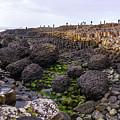Giants Causeway, Northern Ireland by Bob Cuthbert