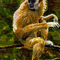 Gibbon by Nelson Caramico