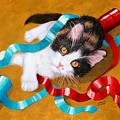 Gift Wrapped Kitty by Lorraine Foster