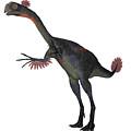 Gigantoraptor Dinosaur On White by Corey Ford