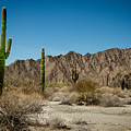 Gila Mountains And Sonoran Desert by Robert Bales