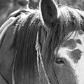 Gillagan The Horse In Glacier National Park   by John McGraw