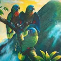 Gimie Dawn 1 - St. Lucia Parrots by Christopher Cox