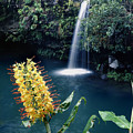 100638-ginger Lily And Hawaiian Waterfall  by Ed  Cooper Photography