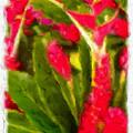 Ginger Plants On Kauai by Bruce Vollert