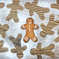 Gingerbread by Tim Gainey