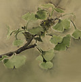 Gingko Branch by Rhonda Alexander