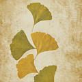 Ginko Leaves by Bernice Williams