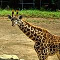Giraffe 1 by Michael Gordon