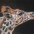Giraffe by Catrin Kloecker
