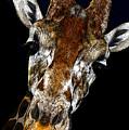 Giraffe Curiosity by David Lee Thompson