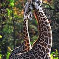 Giraffe by Emmanuel Panagiotakis