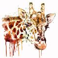 Giraffe Head by Marian Voicu