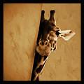 Giraffe Hiding  by Gull G