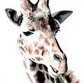 Giraffe II by Athena Mckinzie