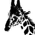 Giraffe In Black And White by Colleen Cornelius