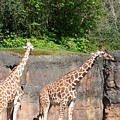 Giraffe by Jesse Salas