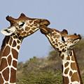 Giraffe Kisses by Michele Burgess