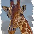 Giraffe by Larry Linton