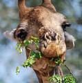 Giraffe  by Mari van Bosch