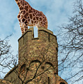 Giraffe On Fort by Les Palenik