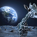 Giraffe On Moon by Sara Pixel Pixie