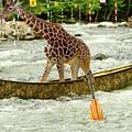 Giraffe Paddling A Whitewater Canoe by Les Palenik