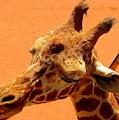 Giraffe by Patrick  Short