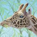 Giraffe Portrait by Tish Wynne