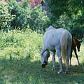 Giverny Mare And Foal Landscape by Nadine Rippelmeyer