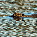 A Swim By by William Tasker