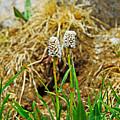 Glacial Wildflowers by Robert Meyers-Lussier