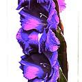 Glad I'm Purple by Katy Granger