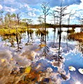 Glades Reflective 1 by Lisa Renee Ludlum