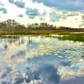 Glades Reflective 2 by Lisa Renee Ludlum