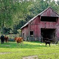 Gladeville Farm by Jan Amiss Photography